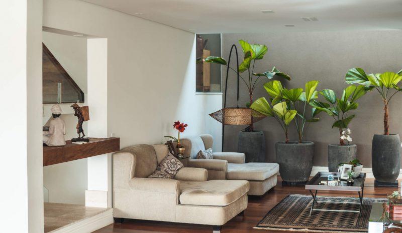 Plantas para apartamento: 6 espécies que se adaptam bem