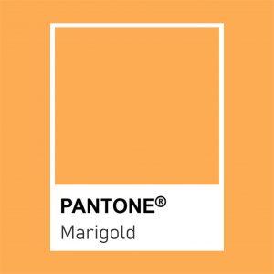 marigold pantone