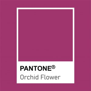pantone orchid flower