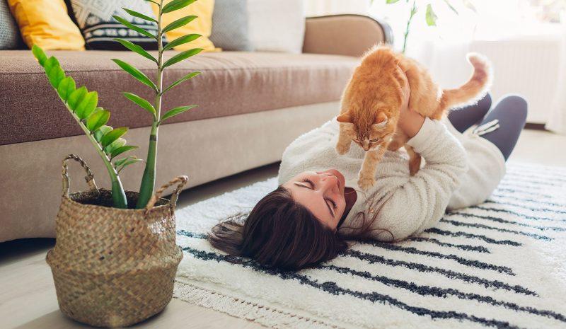 Como escolher tapetes certos para sua casa? Entenda aqui